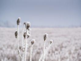 gavarres hivern meteo