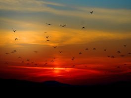 ocells posta sol