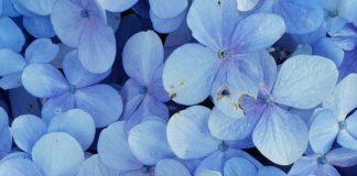meteo gavarres flors